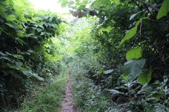 One of my favorite parts of the trail was when it turned into a sort of tunnel of bushes and grass.